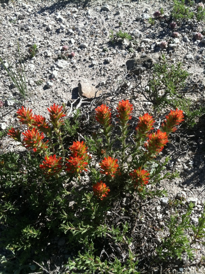 Applegate's Paintbrush