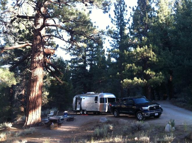 Campsite #8.  Look at the gigantic Jeffery Pine.