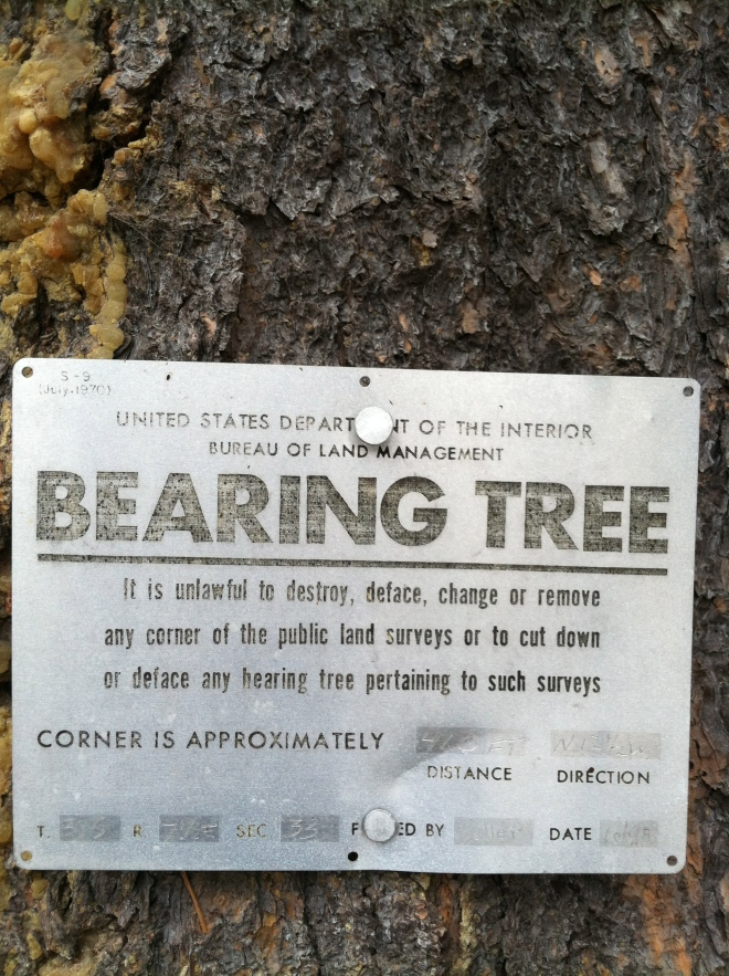 First time we've also seen a bearing tree. It was on BLM Land adjacent to Crater Lake National Park.