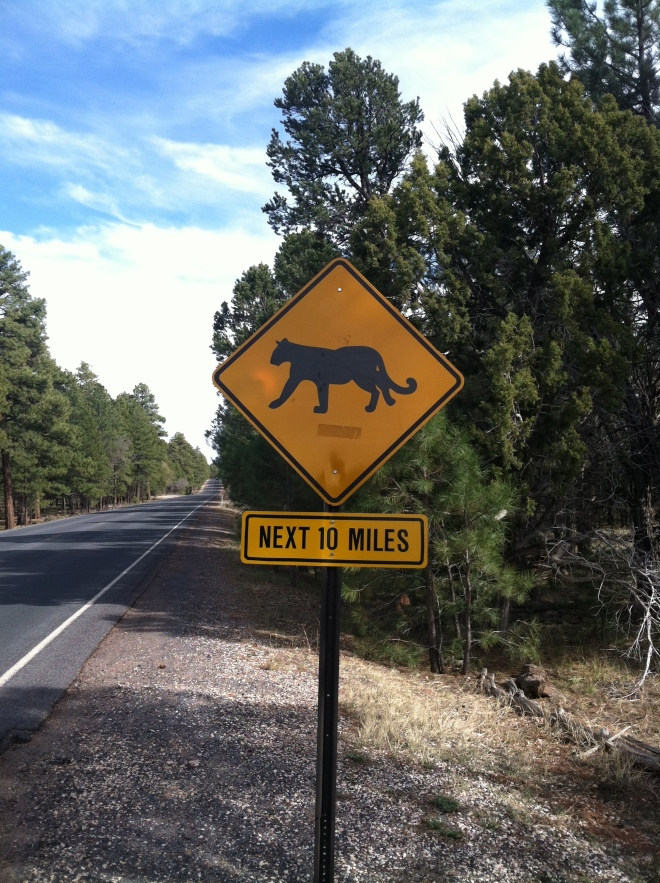 It's not everyday you see a mountain lion sign.