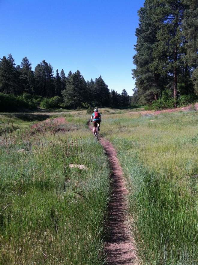 Maverick's Trail in the Boggy Draw area above Delores. When it's too warm to ride in Cortez this is the go to place.