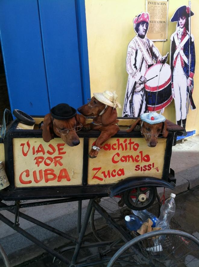 Havana's version of the painted donkeys in Tijuana.