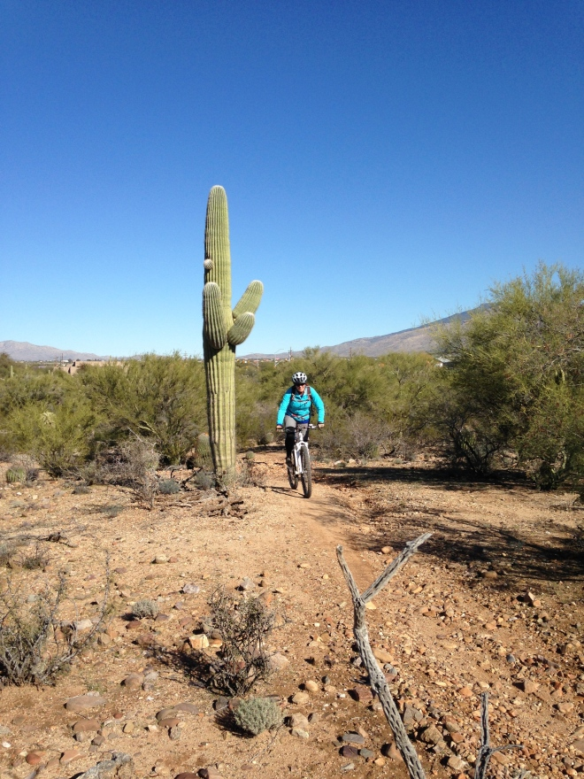 I really dig the Saguaro cacti, not a big fan of the Cholla.