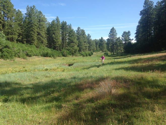 Just another beautiful meadow.  Maverick's Loop, Boggy Draw area