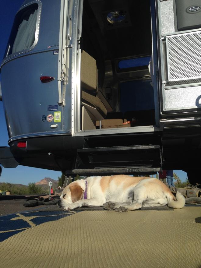 Lucky dog.