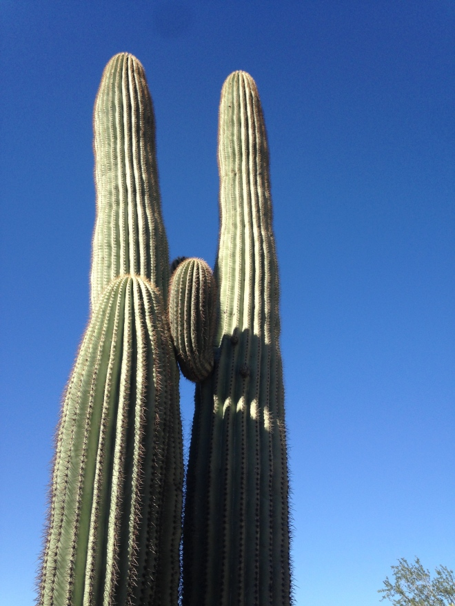 The obligatory blue sky saguaro shot.