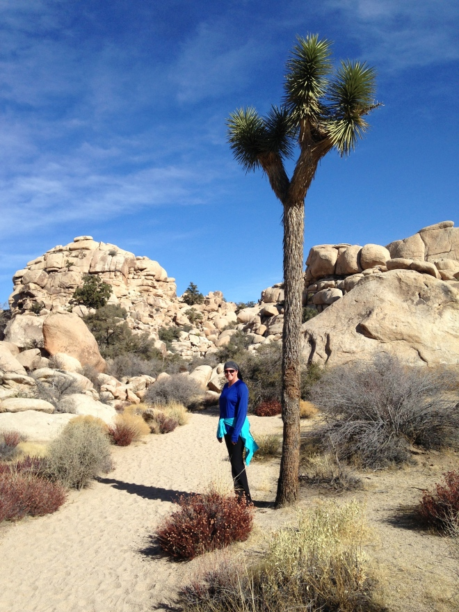 Joshua Trees are very slow growing, on average an inch a year. So do the math, this one must be close to 300 years old.